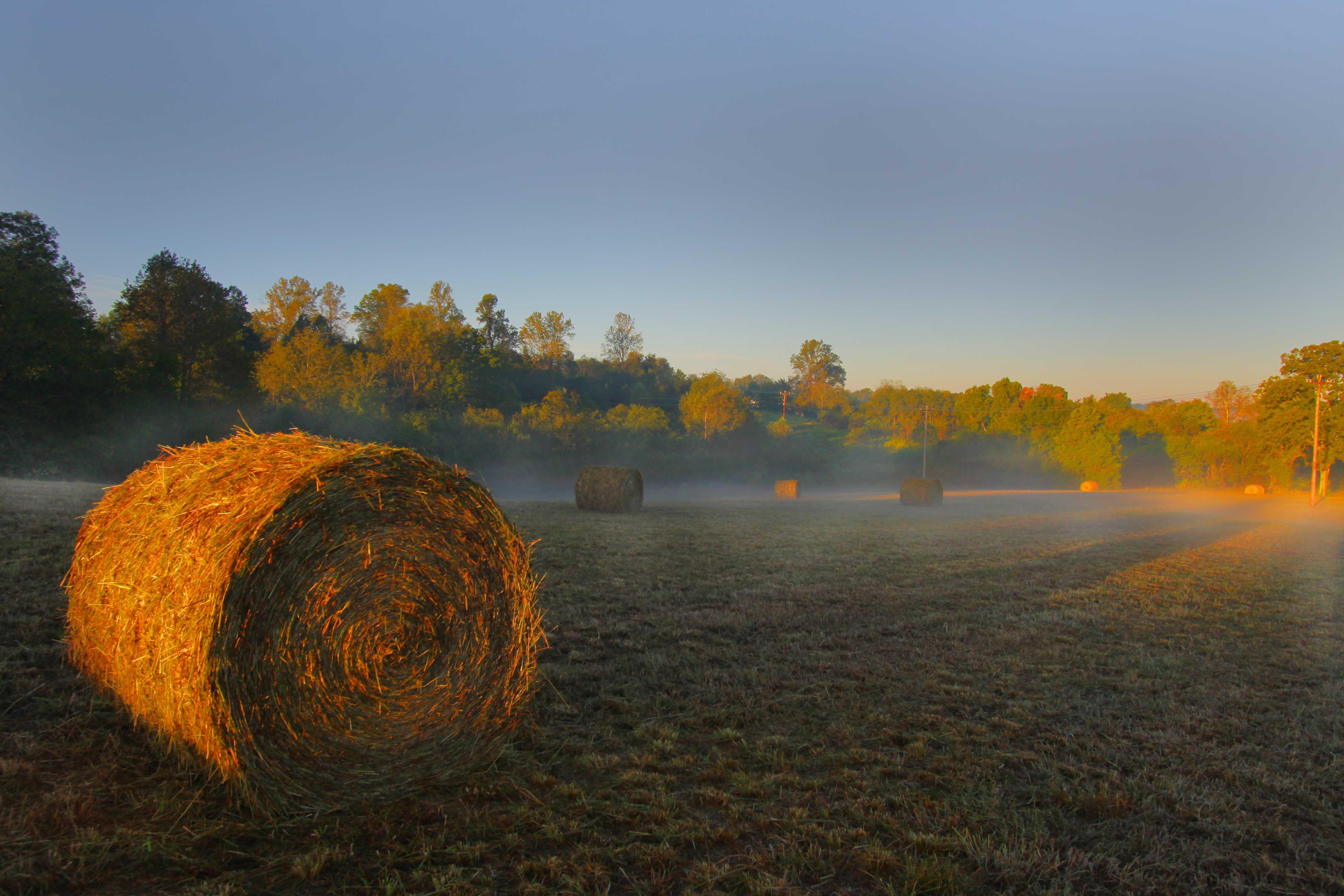 Sunrise in Hay Field